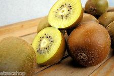 Semi Kiwi rari da nuova zelanda kiwi frutta GIALLO  Spedizione Sicura