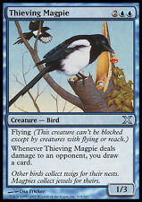 MTG THIEVING MAGPIE FOIL! - GAZZA LADRA - X - MAGIC