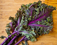 Kale Red Russian Very Tender And Mild SUPER-FOOD  300+ Seeds