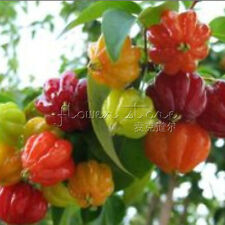 Mixture 20 Scotch Bonnet Pepper 90% germination Seeds Endless Supply TT245
