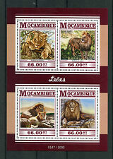 Mozambique 2015 MNH Lions 4v M/S Wild Animals Big Cats Congo Masai Asiatic Lion