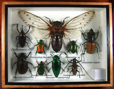 Real Butterfly Insect Bug Taxidermy Display Wooden Framed Box Small Set gpasy 02