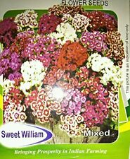 Sweet William Mix  30 seeds All Pincode Shipping