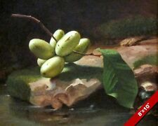 STILL LIFE PAW PAW FRUIT FROM TREE OIL PAINTING ART REAL CANVAS GICLEEPRINT