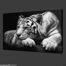 Handmade Modern Art Abstract Oil Painting On Canvas:tiger