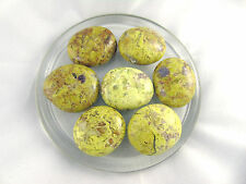 (1) Green Opal Pebble Tumbled Palm Stone Crystal Healing Chakra Balance