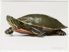 Postcard Western Painted Turtle Colorado State Reptile Close View
