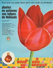 Publicité Advertising 1964  Tulipes de Hollande