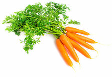 1100mgs Certified Organic Scarlet Nantes Carrot ~Tender Super Sweet 550+ Seeds