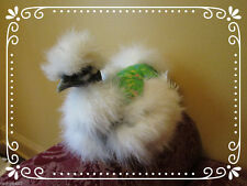 2 SILKIE CHICKEN SADDLE HEN APRON w TAIL FEATHER PROTECTIONS HATCHING EGGS