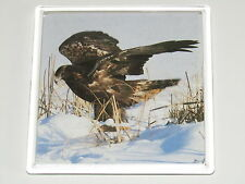 GOLDEN EAGLE HUNT British Bird 9cm Square drinks mat coaster plastic acrylic (A)
