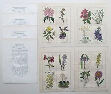 4 Genuine Antique Maund Botanic Garden Flower Prints 1825-51Hand Coloured