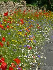 Wild Flower - Cornfield Annual Flower Special Mix - 4g Seed
