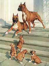 BOXER DOGS AND PUPPIES CHARMING DOG GREETINGS NOTE CARD