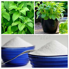 200 Stevia Rebaudiana Seeds Natural Sweetener TT176