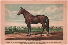 BLACKS HAMBLETONIAN, TROTTING HORSE, HARNESS, chromolithograph, original 1882