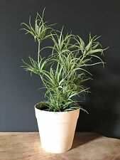 Potted Artificial Spider Fern Plant. Realistic Green Faux Silk Houseplant