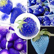 Nouvelles variétés 100 Graines de Fraise Bleu