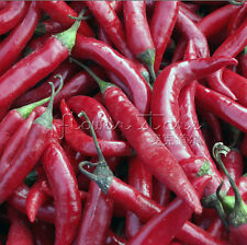 20 Thai Pepper Seeds Popular houseplants Annual TT316