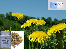 DSR T&T 100g concentrate powder 1:7 of Dandelion leaf  pu gong ying