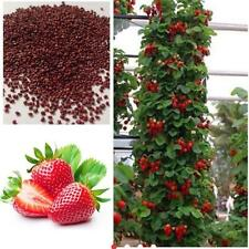 Red 200pcs Strawberry Climbing Strawberry Fruit Plant Seeds Home Garden New AD