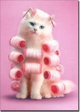 Cat in Curlers Birthday Card - Greeting Card by Avanti Press
