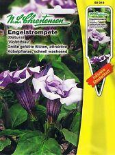 Datura, Engelstrompete - Brugmansia suaveolens, mehrjährig Kübelpflanze 50318
