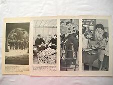 Periódico de muro escuela RDA 1969 ostalgie manipular imágenes foto publicidad publicitarias