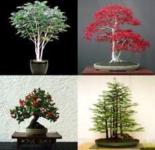 Mix de 20 tree seeds. tree seeds qui peut être utilisé pour bonsai. 5 de chaque variété
