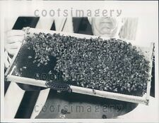 1948 Comb of Honey & Cluster of Bees Press Photo