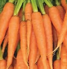 3,000 Carrot Seeds Imperator Carrot Vegetable Seeds