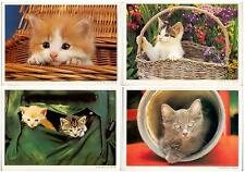 OLD Nice set lot 4 pcs Pussy CAT Kitten PC post card 1990-th feline used LOVELY