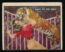 1950 Topps BRING 'EM BACK ALIVE -#86 Back To The Wild