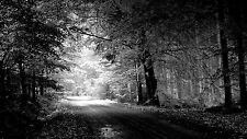 """STUNNING FOREST BLACK AND WHITE TREES ROAD Large Wall Canvas Print 20x30"""""""