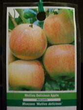 4'-5' MOLLIES DELICIOUS Apples Fruit Tree Apple Trees Ship to all 50 States USA