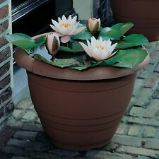 White Water lilies /water features/ponds Plants/5 finest viable seeds