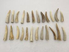 """24 Pack - Deer Antler Points, Tips, Crafts, Taxidermy - 2.5"""" to 4"""" in Length"""