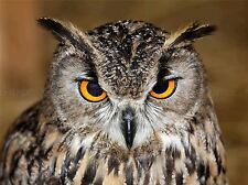 OWL BIRD FACE PORTRAIT PHOTO ART PRINT POSTER PICTURE BMP1504A