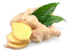 SEMI DI ZENZERO GINGER SEEDS DA CUCINA  ORANAMENTALI ORNAMENTAL OR  FOOD