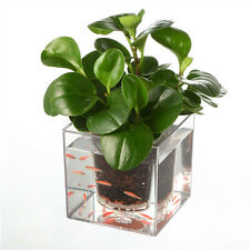 Self-Watering Planter Fish Tank Clear Tube Plant Pot / Flower Pot Aquarium 12*12
