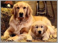 Set of 4 Golden Retriever Dog Puppy Puppies Dogs Greetings Notecards / Envelopes