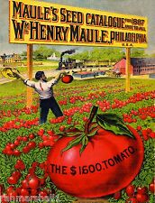1887 Maules Tomato Vintage Vegetable Seed Packet Catalogue Advertisement Poster