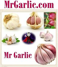 Mr Garlic .com Chili Peppers Mexican Food VIP Domain Name URL Food Italian Spice