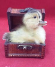 *Taxidermy Long Island Domestic Duck/Duckling w/Trunk/kitchen-farm-country deco