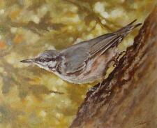 John Silver Original Oil Painting Of A Nuthatch Bird - British Wildlife Art