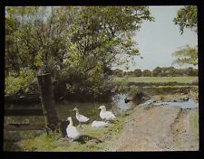 Glass Magic Lantern Slide GEESE NEAR POND NEAR CHARNOCK RICHARD DATED 1947 PHOTO