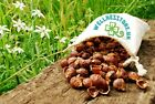 FROM NEPAL 1Kg Indian Soap Nuts Laundry&Dishwasher Detergent + WASH BAG