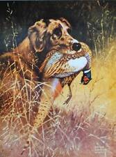 vintage art Bird Dog with Ring-Neck Pheasant by Lynn Bogue Hunt