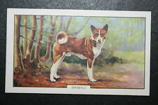 Basenji   1930's Original  Vintage Coloured Card  VGC