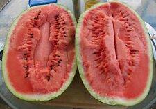JUBILEE WATERMELON 30 SEEDS SWEET RED INSIDE AND BEAUTIFULLY STRIPED OUTSIDE